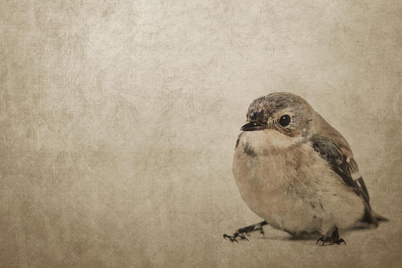 teckna fåglar