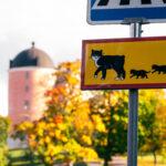 Pelle Svanslös guidad tur | Go Adventure