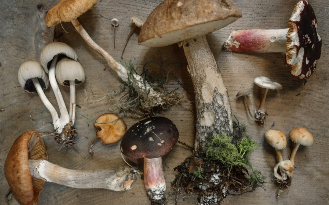 Svamptider | Biotopia